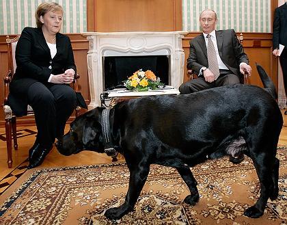Zastrasivanje Angele Merkel